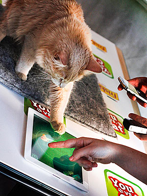 New iPad Game Has Cats Playing with Humans