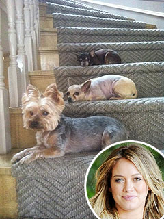 Hilary Duff – and Her Dogs – Anxiously Awaiting Baby | Hilary Duff