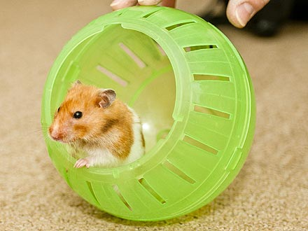 It's Alive! 'Dead' Hamster Crawls Out of Its Grave| Pet News, Unusual Pets