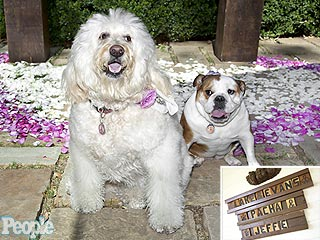 See Ricki Lake's Dogs in Her Secret Wedding
