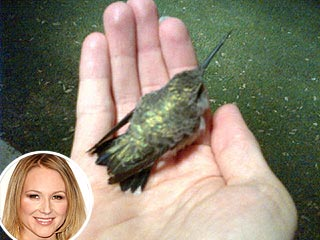 Jewel Rescues Injured Hummingbird | Jewel