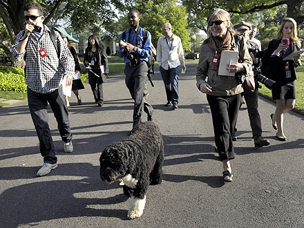 Right This Way, Please! Bo Leads White House Garden Tour| Bo Obama, Stars and Pets, Dogs