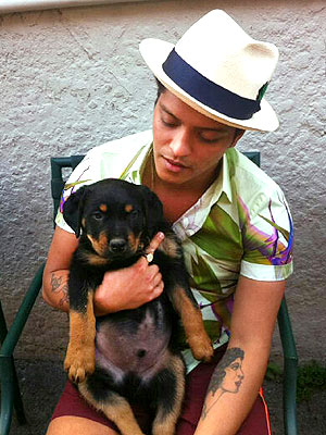 Bruno Mars Gets Dog