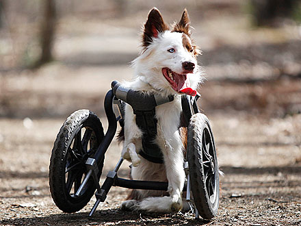 Disabled Dog Goes Off-Roading in His Wheelchair