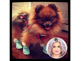 Why Kelly Osbourne Put Shoes on Her Dog | Kelly Osbourne