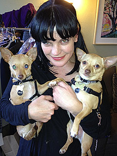 Pauley Perrette Adopts Two Rescue Dogs | Pauley Perrette