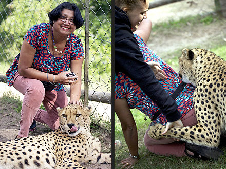 Woman Attacked by Cheetahs at South African Game Park