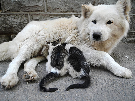 Aww! Maternal Dog Adopts Two Kittens