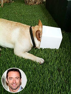 PHOTO: Hugh Jackman&#39;s Dog Is a &#39;Pot Head&#39; | Hugh Jackman