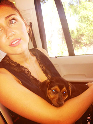 Miley Cyrus and Happy Take the Town| Stars and Pets, Dogs, Miley Cyrus