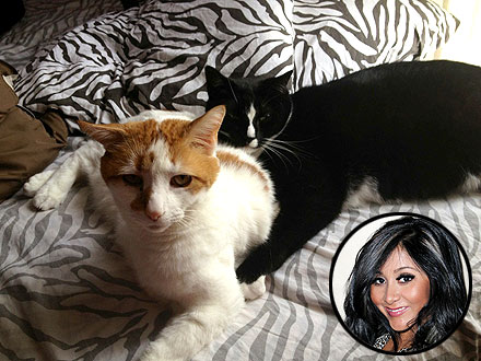 Snooki Tweets Photos of Cats