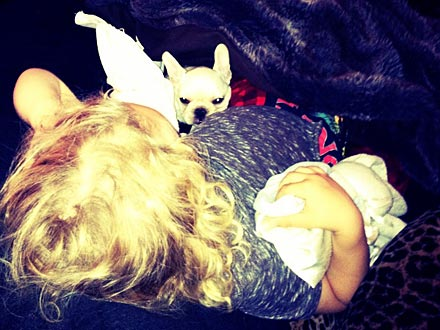 Ashlee Simpson Shows Off Her New Puppy!  Stars and Pets, Dogs, New Pet, Ashlee Simpson