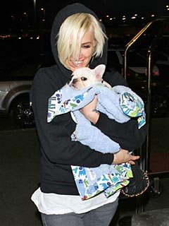 Ashlee Simpson: Bronx Loves the New Puppy | Ashlee Simpson