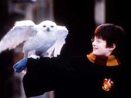 Harry Potter: Pet Owls Are Being Abandoned After Franchise Ends
