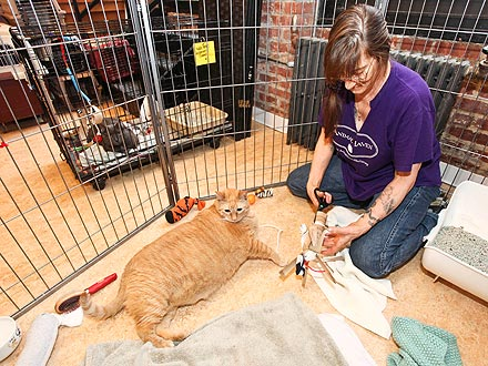 Fat Cat Sponge Bob Weighs 33 Lbs.| Cats