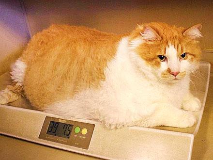 40-Lb. Cat Happy Despite Weight