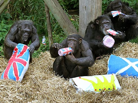Animals Celebrate Queen's Diamond Jubilee| Dogs, Queen Elizabeth II