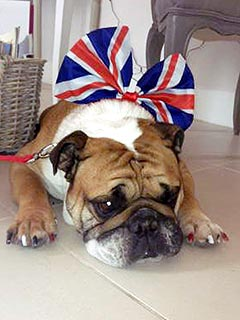 Animals Celebrate Queen&#39;s Diamond Jubilee
