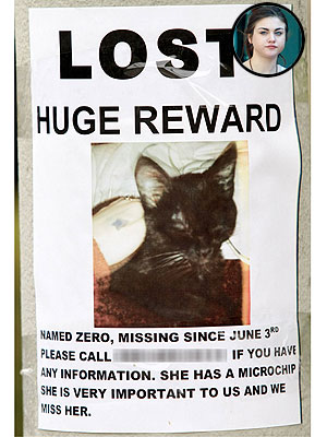 Frances Cobain: Help Me Find My Cat