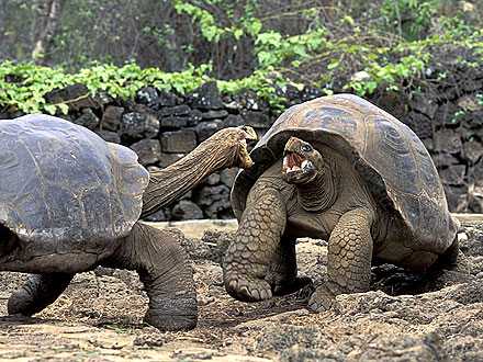 115-Year-Old Giant Tortoises to Divorce