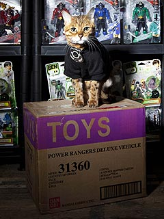 Millie the Security Guard Cat Patrols Toy Factory