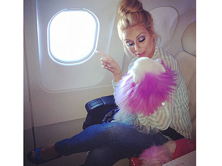 Aubrey O&#39;Day &#8211; and Her Dogs! &#8211; Fly First Class| Danity Kane, Stars and Pets, Dogs, Pet Pampering