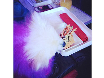 Aubrey O'Day – and Her Dogs! – Fly First Class| Danity Kane, Stars and Pets, Dogs, Pet Pampering