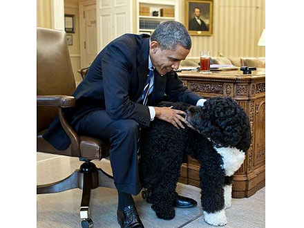 President Barack Obama and Bo: Twitter Photo