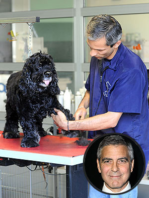 George Clooney&#39;s Dog Enjoys a Spa Day in Italy