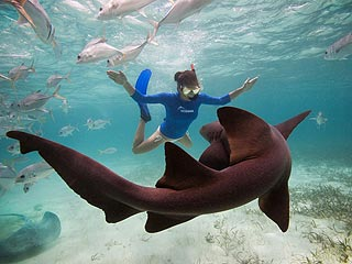 Kate Walsh Swims with Sharks in Belize