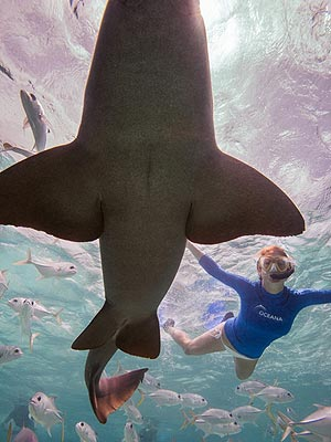 Kate Walsh Swims with Sharks in Belize| Exotic Animals & Pets, Kate Walsh