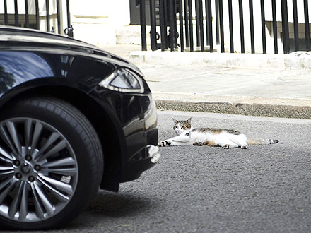 Larry the Cat Sleeps on 10 Downing Street| Cats, Stars and Pets, David Cameron