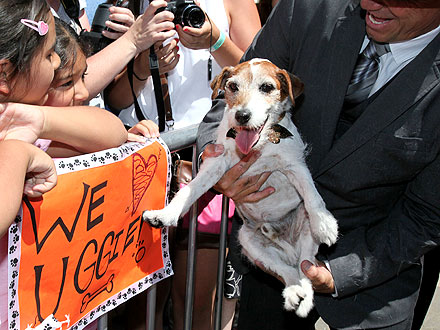 Uggie's Paw Prints Immortalized at Grauman's Chinese Theatre| Stars and Pets, Dogs, Uggie, The Artist