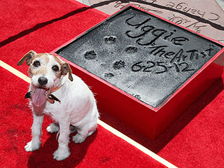 Take a Bow! Uggie Gets Immortalized at Paw-Print Ceremony   Uggie