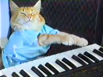 Minneapolis Film Festival Honors the Best Internet Cat Videos