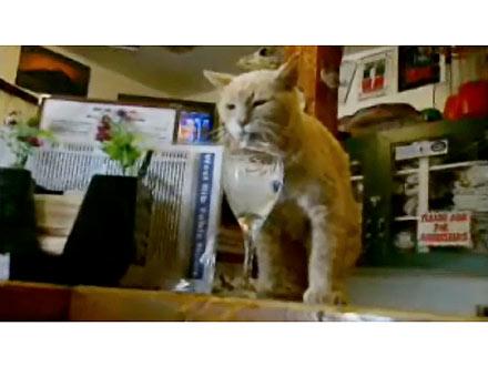 Cat Is Mayor of Alaska Town