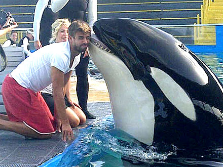Shakira & Gerard Pique Get Kisses from Killer Whale| Stars and Pets, Zoo Animals, Shakira