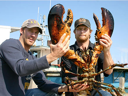 21-Lb. Lobster Settles Into New Home| Unusual Pets