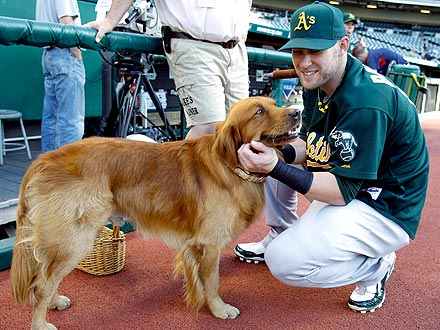 Oakland Athletics Break World Record with 718 Dogs in Attendance