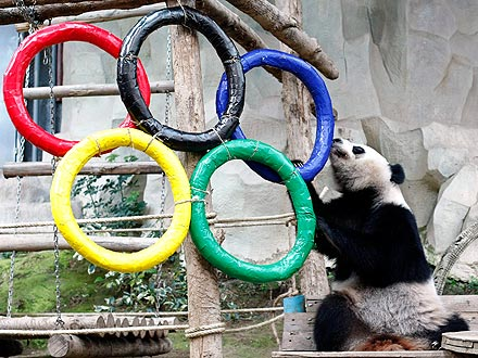 Panda Plays with Olympic Rings: Photo