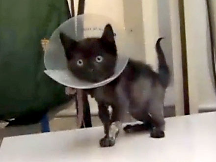 Kitten Rescued from Glue in Oregon Parking Garage