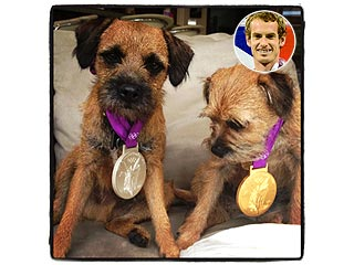 Look Who's Wearing Andy Murray's Olympic Medals: His Dogs!
