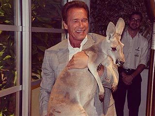 Arnold Schwarzenegger Does Lifts – with a Kangaroo