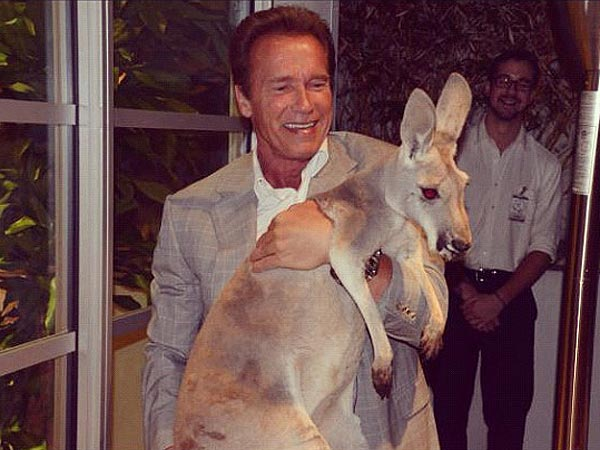 Arnold Schwarzenegger Tweets Photo with Kangaroo