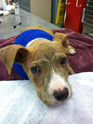 Puppy Survives Toss from Moving Car