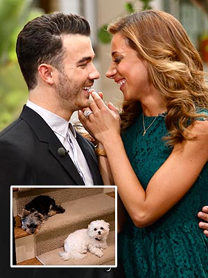 Kevin & Danielle Jonas: Dogs Prep Us for Babies