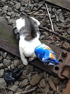 Subway Conductor Saves Kitten from Tracks