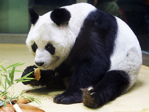 One of the World's Oldest Pandas Has Died at Berlin Zoo