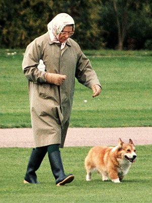 Queen Elizabeth&#39;s Corgis Attack Princess Beatrice&#39;s Terrier