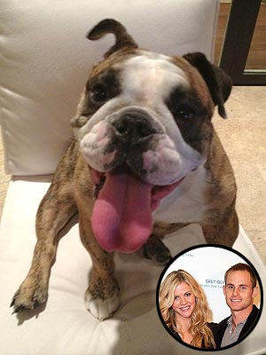 Andy Roddick Retiring: Wife Brooklyn Decker Tweets Dog is Happy